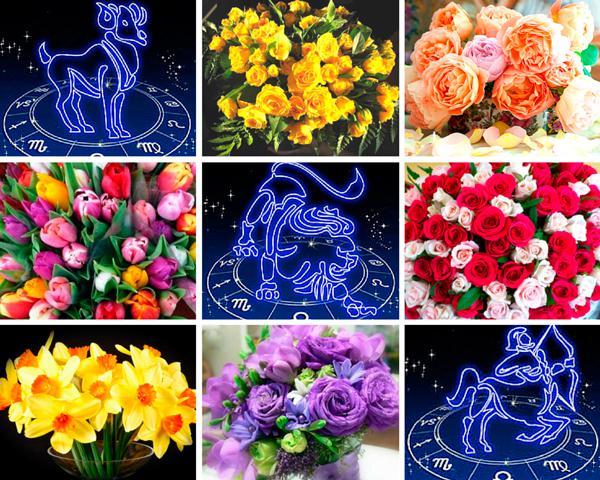 Астрология и флористика. Выбираем цветы по знаку зодиака